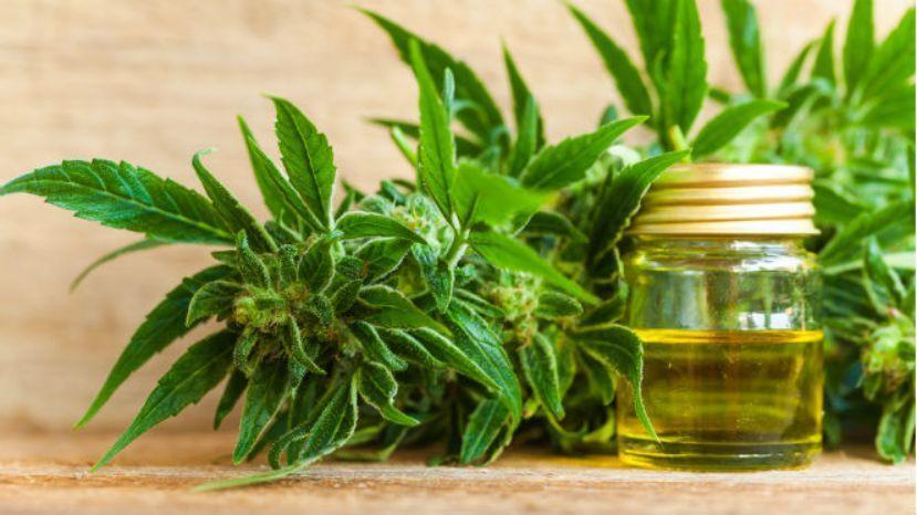 Cambiemos convoca al Colegio de Farmacéuticos por el aceite de cannabis